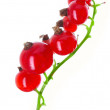 Fresh currant - Stock Photo