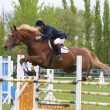 Show jumping — Stock Photo #1317655