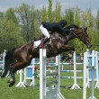 Show jumping - Foto de Stock  
