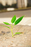 Young plant — Stock Photo