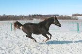 Skipping horse. — Stock Photo