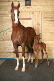 Horse with a foal — Stock Photo