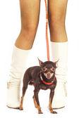 Cane e gambe femminile. — Foto Stock