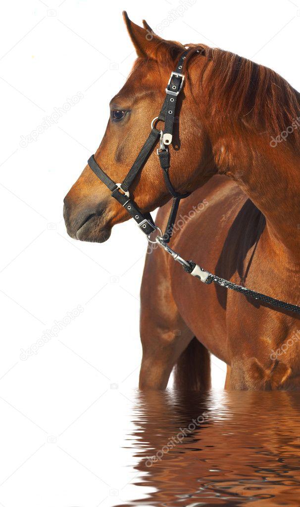 К чему снятся лошади женщине коричневые