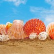 Stock Photo: Secockleshells