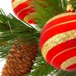 毛皮-圣诞树白色背景上 — 图库照片