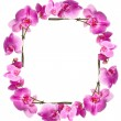 Framework from flowers orchids — Stock Photo #1322484