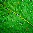 Green leaf — Foto Stock