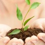 jonge plant in handen van de persoon — Stockfoto