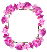 Framework from flowers orchids — Stock Photo