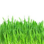 Green grass — Stock Photo