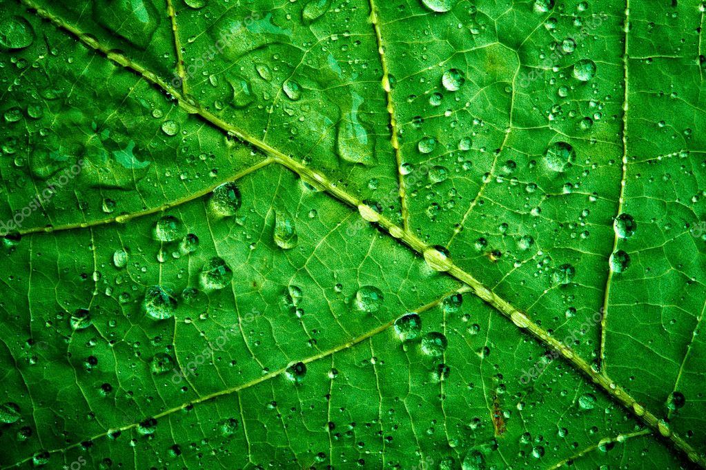 Photo green leaf close up — Stock Photo #1322851