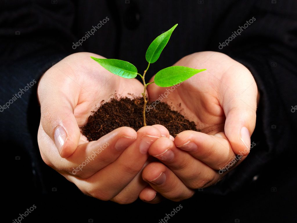 Young sprout in a hand  Stock Photo #1324358