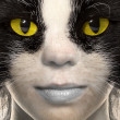 Portrait of a cat with yellow eyes — 图库照片
