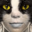 Portrait of a cat with yellow eyes — Foto de Stock