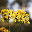 Stock Photo: Autumn flowers