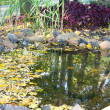 Small pond — Stock Photo
