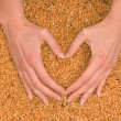 Wheat heart — Stock Photo