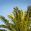 Royalty-Free Stock Photo: Palm branches over blue sky