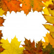 Autumn fall leaf frame — Stock Photo