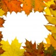 Autumn fall leaf frame — Stockfoto