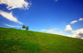 Green fields and blue sky — Stock Photo
