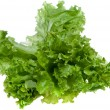 Lettuce — Stock Photo #1150482
