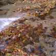 Autumn river — Stock Photo #1280067