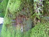 Moss — Stockfoto