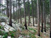 Brända skogen gränsar — 图库照片