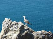 Sea-gull — Photo