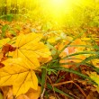 Fun sunbeams and golden leaves by autumn - Stock Photo