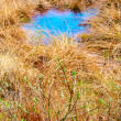 Spring meadow with blue puddle. — Stockfoto