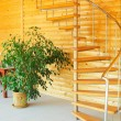 Ficus and spiral staircase. - Stock Photo