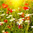 Summer morning above green meadow. — Stock Photo