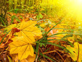 Wonderful forest early morning by autumn — Stock Photo