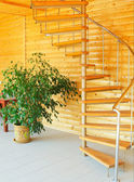 Ficus and spiral staircase. — Stock Photo