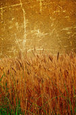 Old brown wall and field of wheat in it. — Stock Photo