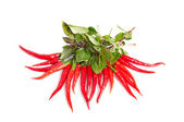 Green basil and red peppers on a white. — Stock Photo