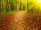 Autumn morning in the deep forest. — Stock Photo