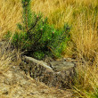 Stump and little pine-tree. — Stock Photo
