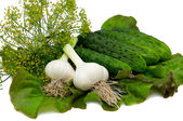 Cucumbers,lettuce,dill,garlic isolated o — Stock Photo