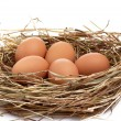 Wonderful  chicken eggs in a  hay. - Stock Photo