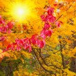 Wonderful sunbeams into fall forest. — Stock Photo