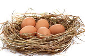 Wonderful chicken eggs in a hay. — Stock Photo
