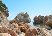 夏によって崖と海沿い — ストック写真