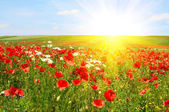 Splendid sunset over green meadow. — Stock Photo