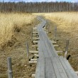 Footpath through a bog. - Stock Photo