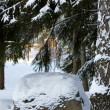 Stone in winter forest. - Stock Photo