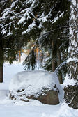 Stone in winter forest. — Stock Photo